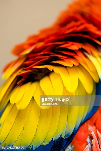 macaw, close-up of feathers - perroquet photos et images de collection