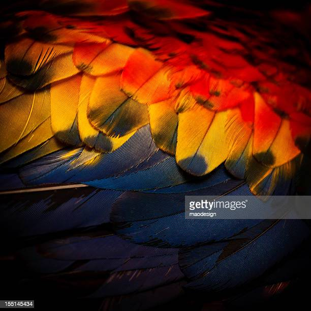 Macaw feather in close up
