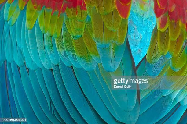 Macaw feathers (Ara chloroptera), close-up