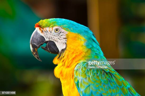 macaw - gatorland orlando - file:the_wyoming,_orlando,_fl.jpg stock pictures, royalty-free photos & images