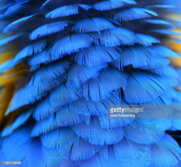 macaw parrot bird feather - beak stock pictures, royalty-free photos & images