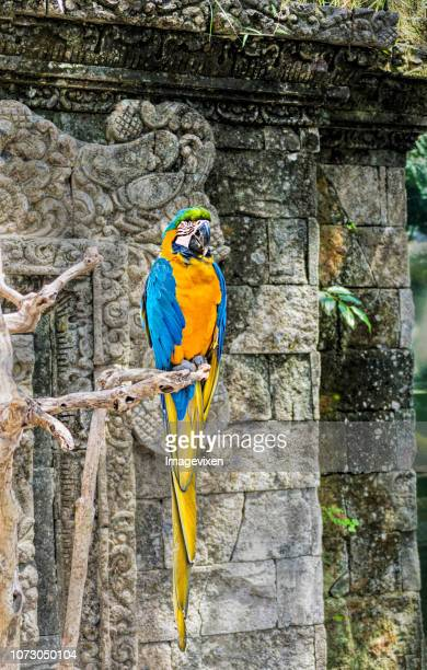 Macaw perched on a branch, Indonesia