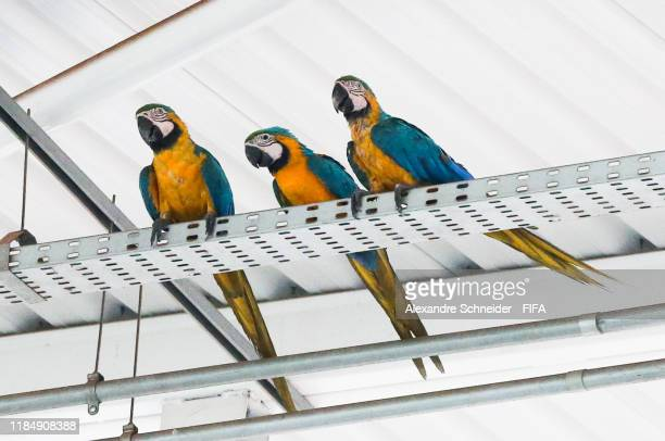 Macaws are seen in the stadium during the match between Hungary and Ecuador for the FIFA U17 World Cup Brazil 2019 on November 01 2019 in Goiania...