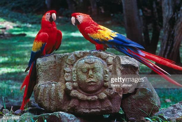 macaws on mayan ruins - scarlet macaw stock pictures, royalty-free photos & images