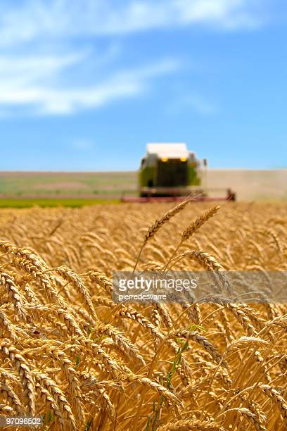 Machine récolter le champ de blé