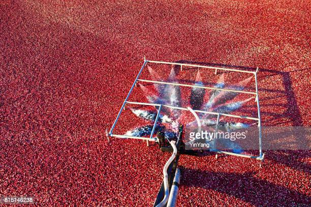 machine wet harvesting cranberry bog farm in the marsh field in wisconsin, usa - cranberry harvest stock pictures, royalty-free photos & images