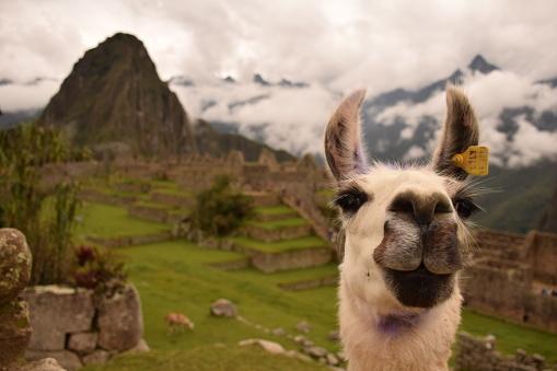Machu Picchu 940853660