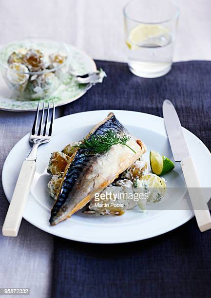 mackerel  fillet on a bed of crushed potato salad - mackerel stock pictures, royalty-free photos & images