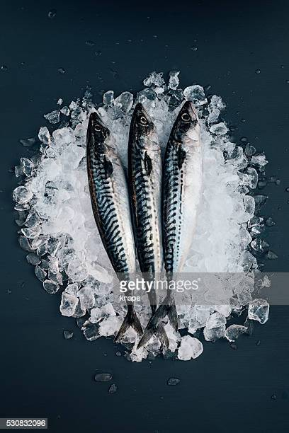 mackerel fish on ice seafood still life - mackerel stock pictures, royalty-free photos & images
