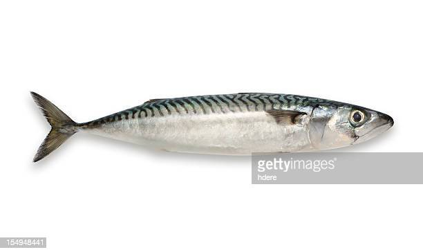mackerel isolated on white background - mackerel stock pictures, royalty-free photos & images