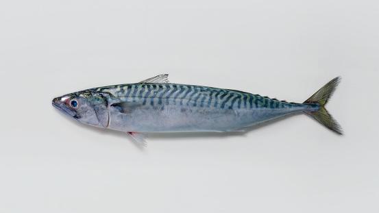 mackerel - gettyimageskorea
