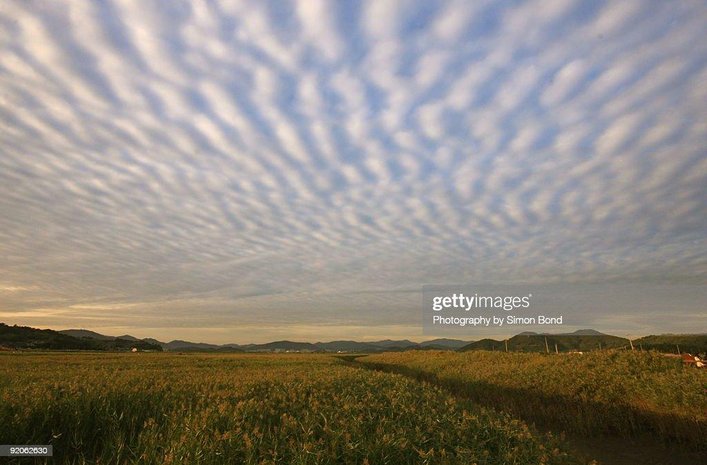 Mackerel skies : Stock Photo