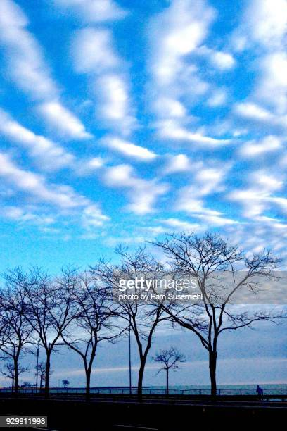 mackerel sky, altocumulus clouds, over bare trees - altocumulus stockfoto's en -beelden
