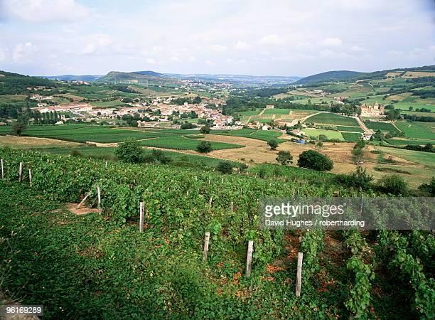 Maconnais vineyards, Poilly Fuisse, near Macon, Saone-et-Loire, Burgundy, France, Europe