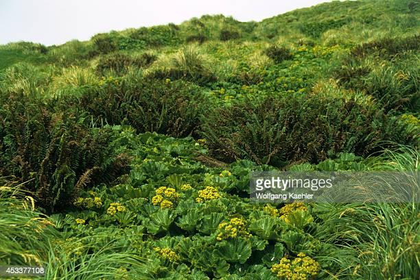 Macquarie Island Vegetation