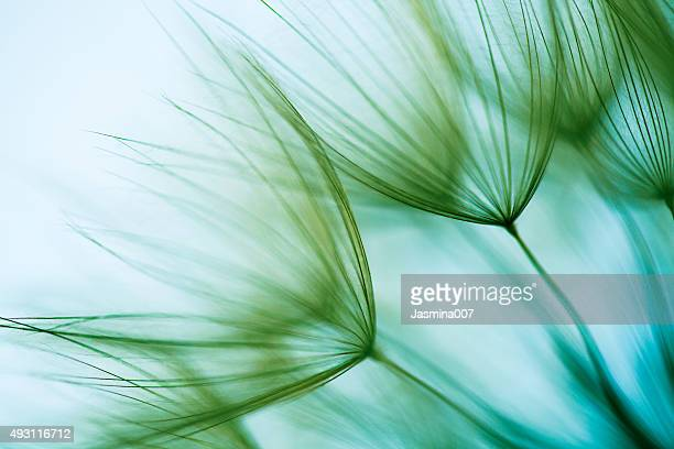 macro dandelion seed - wind stock pictures, royalty-free photos & images