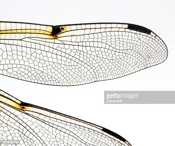 Macro dragonfly, damselfly wings