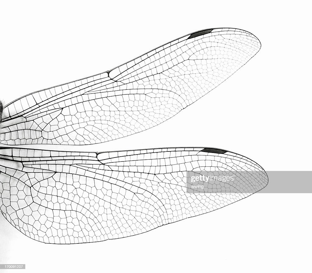 Macro Dragonfly Wings : Stock Photo