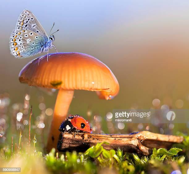 Macro fairy tale (ladybird & butterfly)