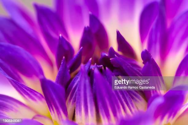 macro flower in hdr - 高ダイナミックレンジ画法 ストックフォトと画像