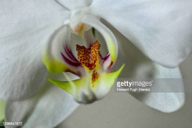 macro flower stamed - howard pugh stock pictures, royalty-free photos & images