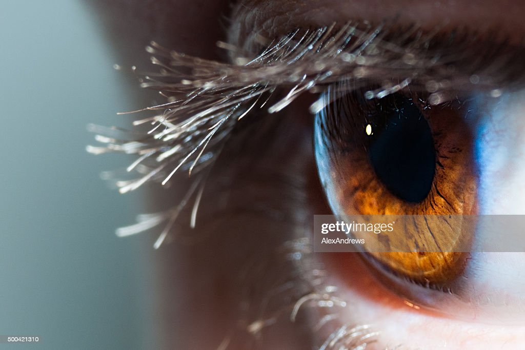free detailed macro images and stock photos freeimages free macro images pictures and royalty free stock photos freeimages
