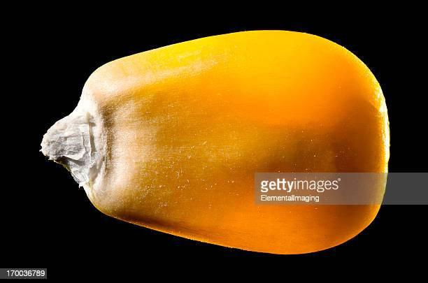 macro image of a single corn kernel isolated on black - corn cob stock photos and pictures