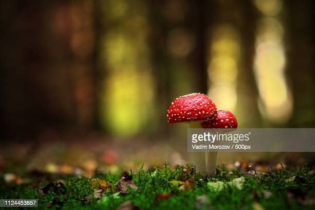 macro image - forest floor stock photos and pictures