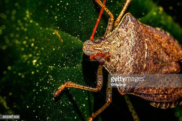 macro insect - microbiologia imagens e fotografias de stock