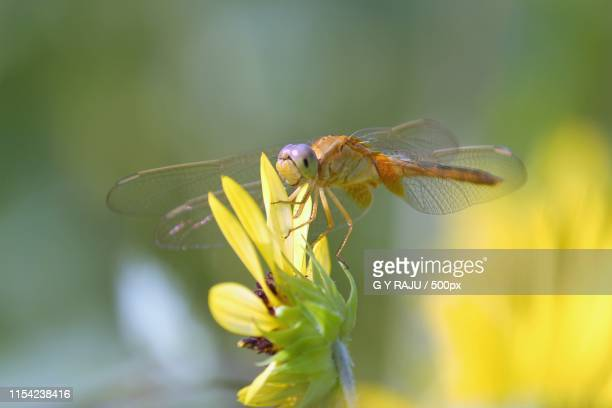 macro master - mayfly stock pictures, royalty-free photos & images