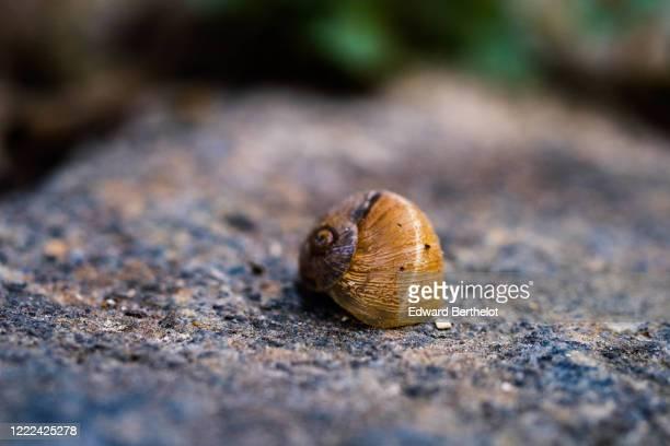 macro nature - empty shell - edward berthelot photos et images de collection