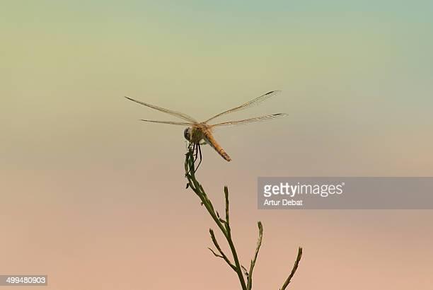macro nature photography - delta del ebro fotografías e imágenes de stock