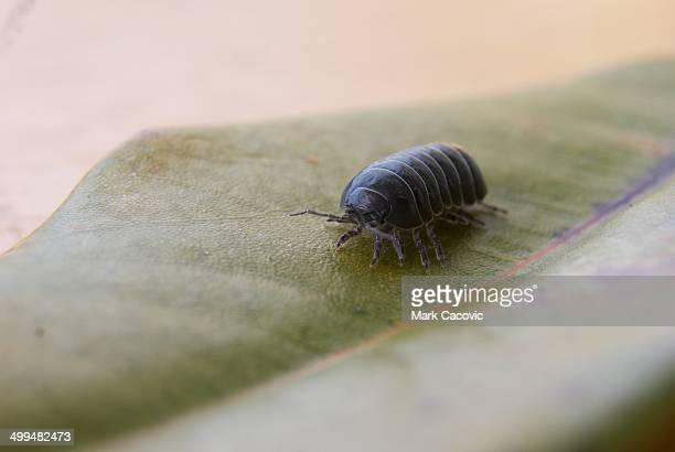 macro nature photography - potato bug stock pictures, royalty-free photos & images