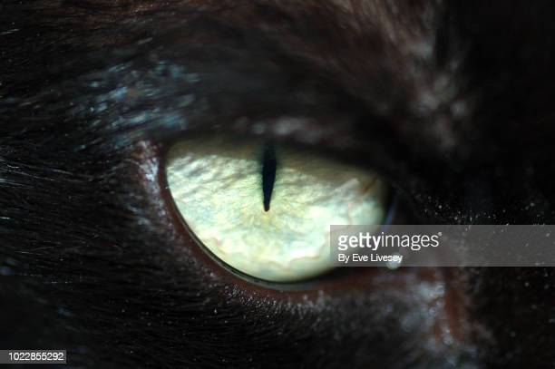 macro of a black cat eye - animal eye stock pictures, royalty-free photos & images