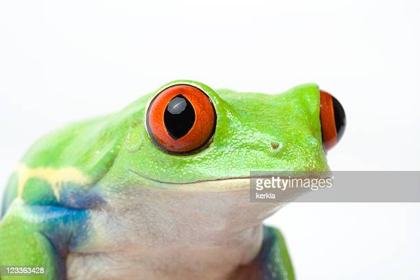 macro of a curious looking frog