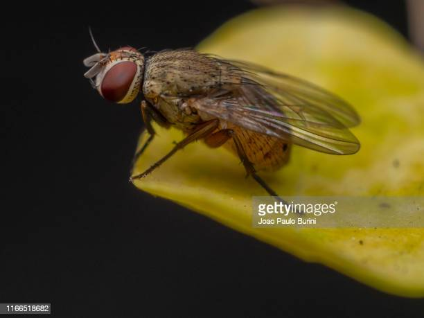 macro of a garden fly - sorocaba stock pictures, royalty-free photos & images