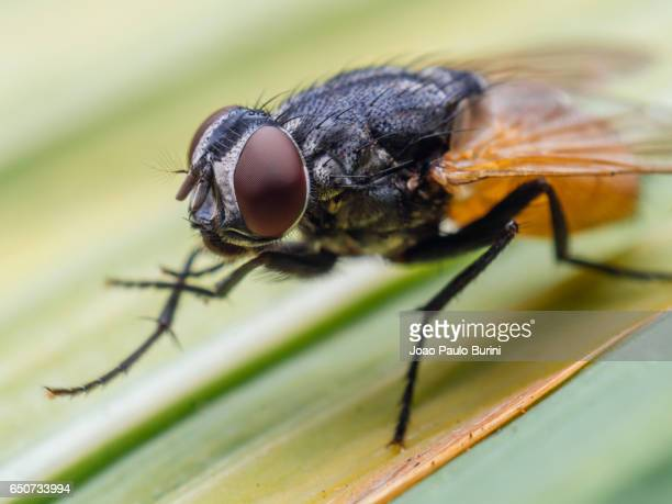 Macro of a house fly on a leaf
