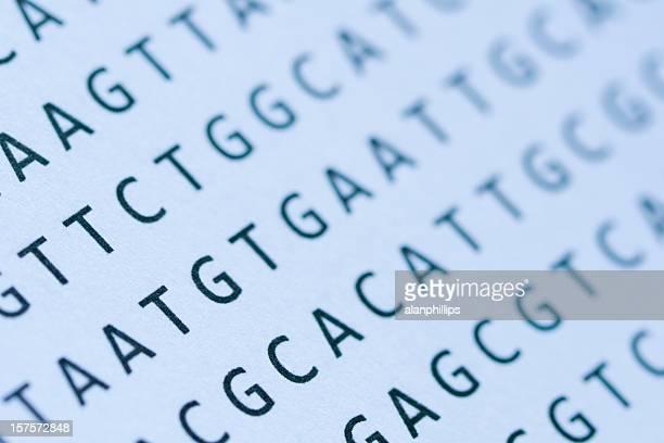 Makro von DNA nucleotide sequence Computerausdruck auf Papier