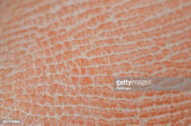 macro of dry human skin - extreme close up stock pictures, royalty-free photos & images