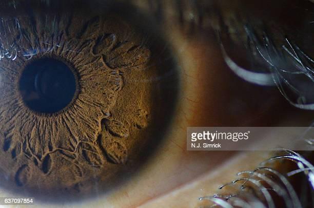 macro of human eye - iris eye stock photos and pictures