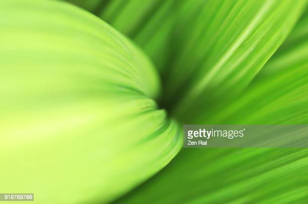 macro of tropical leaves patterns in shades of green - zen rial stock photos and pictures