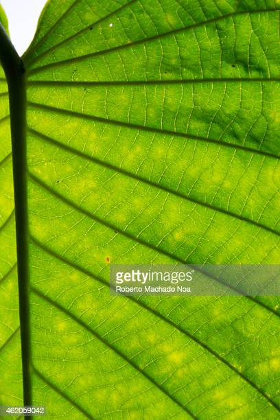 Macro or close up of a green leaf showing the texture and patterns of nature