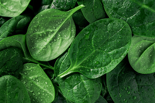 Macro photography of fresh spinach. Concept of organic food. 906619122