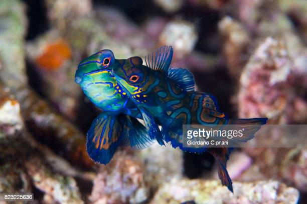 Macro photography of the underwater world of the Philippines.