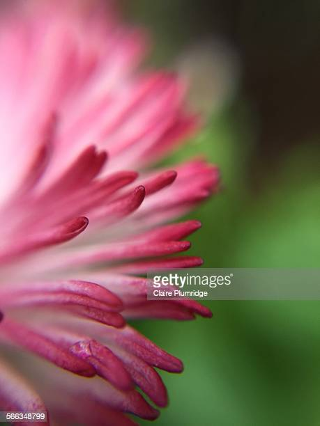 macro photography - claire plumridge stock pictures, royalty-free photos & images
