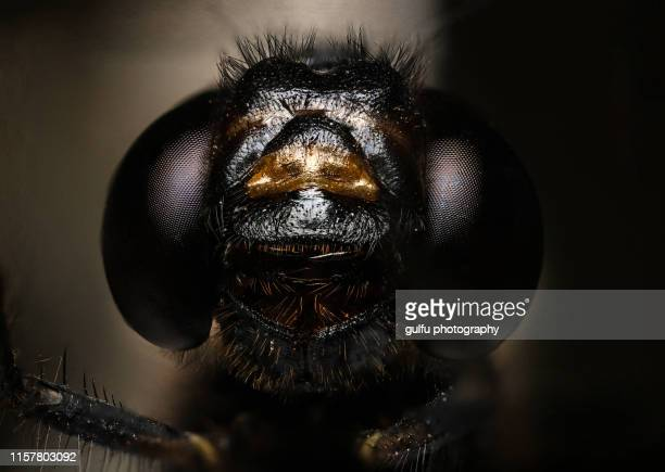 macro photos of dragon fly portrait - grasshopper stock pictures, royalty-free photos & images