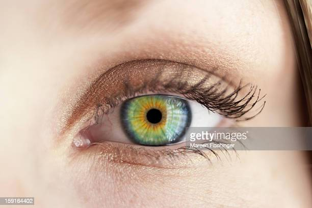 macro shot of a felmale eye with green iris - green eyes stock pictures, royalty-free photos & images