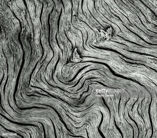 Macro shot of a piece of driftwood