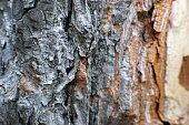 macro shot an intricate pine tree
