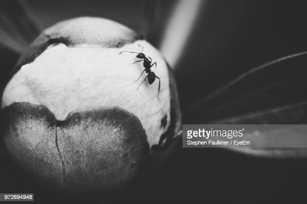 Macro Shot Of Ant On Plant Pod